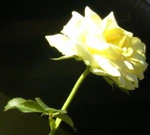 TS3U0253