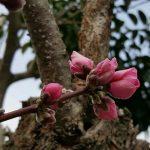また春がくる。